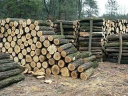 Дрова дубовые колотые и неколотые кругляк метровые, чурки.