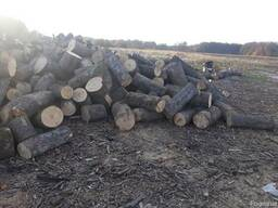 Дрова дубовые метровка, чурки - фото 3