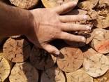 Дрова ольха береза - фото 4
