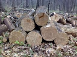 Дрова твердых лесных пород. Доставка.
