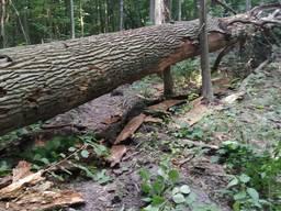 Дрова дуб