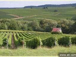 Экскурсия на Артемовский завод шампанских вин