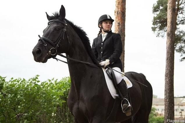Экскурсия на конюшню урок верховой езды в крытом манеже
