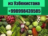 Экспорт сельхозпродукции из Узбекистана - фото 1