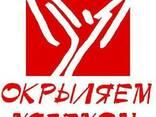 Подготовка бизнес-планов крымских предпринимателей - фото 1