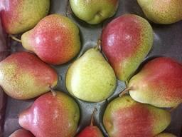 Экзотические фрукты по оптовым ценам