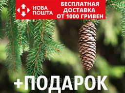 Ель европейская семена (50 шт) (ель обыкновенная. ..