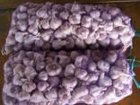 Элитный Херсонский чеснок - высококачественный, эксклюзивный - фото 5
