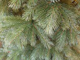 """Елка ель искусственная литая """"Кедр Европейский"""" зеленая, пышная густая, 230 см, с. .."""