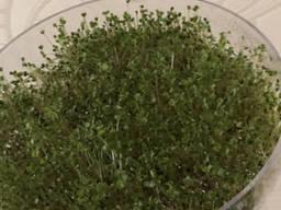 Емкость для проращивания зерен и семян (дополнительная). ..