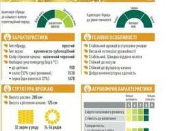 ЕС Конкорд кукуруза купить, Конкорд цена, фао 250