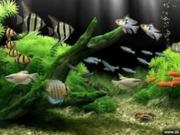 Эскурсия на Монастырский остров с посещением аквариума