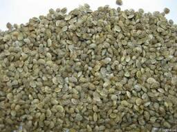Эспарцет, сорт песчаный 1251, семена