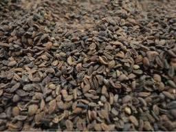 Фацелия семена