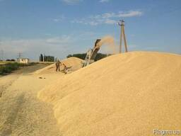 Feed Wheat, Human Wheat, Corn, Barley , Soyabean, W