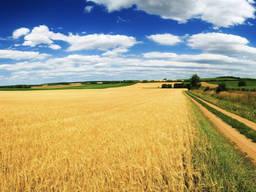Фермерское хозяйство 1200 га.