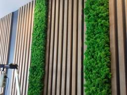 Фітостіни та панно з стабілізованим мохом
