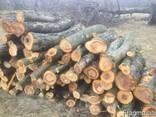Фруктовый лес, орех - фото 2