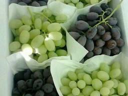 Фрукты, сухофрукты и овощи из Узбекистана