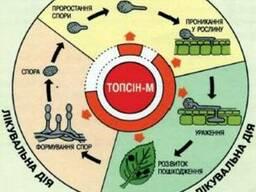 Фунгіцид Топсін М
