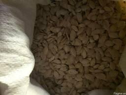 Гарбузове насіння, квасоля, пір'я