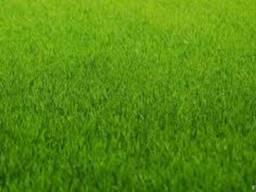 Семена газонной травы (суміш газонна) -универсальный газон