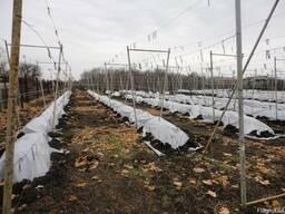 Геотекстиль 300пл. для укрытия винограда