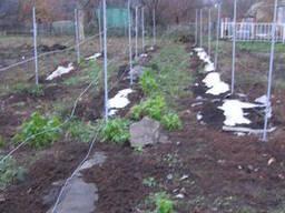 Геотекстиль для укрытия винограда