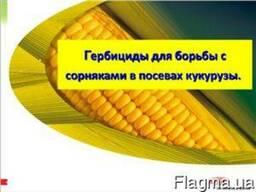 Гербициды на кукурузу - Прима, Титус, Базис, Хармони, Милагр