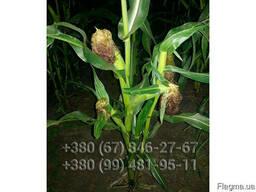 Гибрид канадской кукурузы Skeena FF-199 ФАО 250