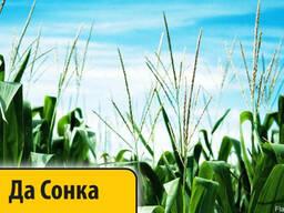 Гибрид кукурузы Да Сонка Dow Seeds