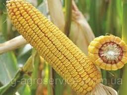 Гибрид кукурузы ДН Орильский ФАО 320