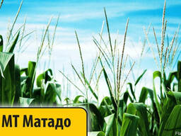 Гибрид Кукурузы МТ Матадо (Dow Seeds) Импорт Лучшая цена