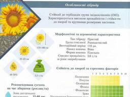 Гибриды подсолнечника, отечественной селекции и импорт.