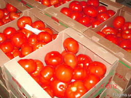 Гофролоток под томат на 5-6 кг
