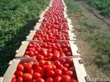 Гофроящик под перец, помидоры - фото 2