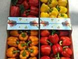 Гофроящик под перец, помидоры - фото 3