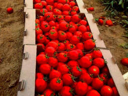 Гофроящик под помидор на 10-12 кг