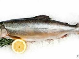 Красная рыба без чешуи(Голец охлажденный)