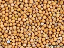 Горчица белая семена