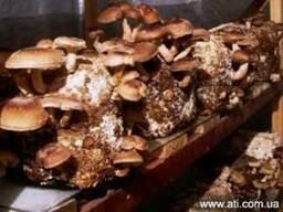 Готовые грибные блоки недорого