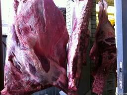 Говядина Халяль Halal beef коров бык Полутуши, кусок, блочка