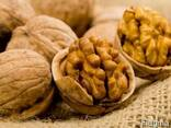 Грецкий орех кругляк - фото 1