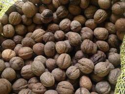 Грецкий орех урожая 2018 года