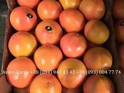 Грейпфрут оптом (Турция). Лучшее предложение в Украине.