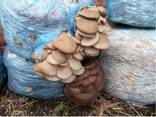 Грибной компост, Бровары - фото 1