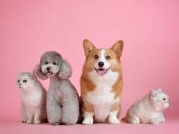 Грумер, стрижка собак , кошек.