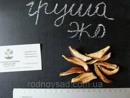 Груша сушеная домашняя (50 грамм) сухофрукт, сушка. ..
