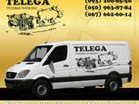 """Грузовые перевозки """"Телега"""", Грузовое такси """"Телега"""" - фото 1"""