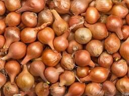 Халцедон цибуля ріпчаста насіння.